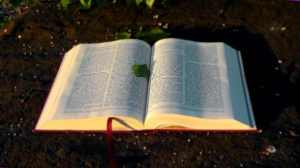 bible-138977_640