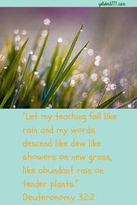 Let my Teaching 2