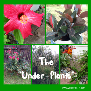 The %22Under-plants%22