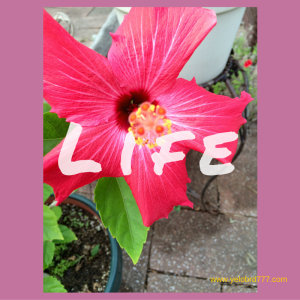 LIFE-2