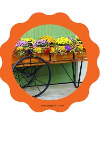 mum cart