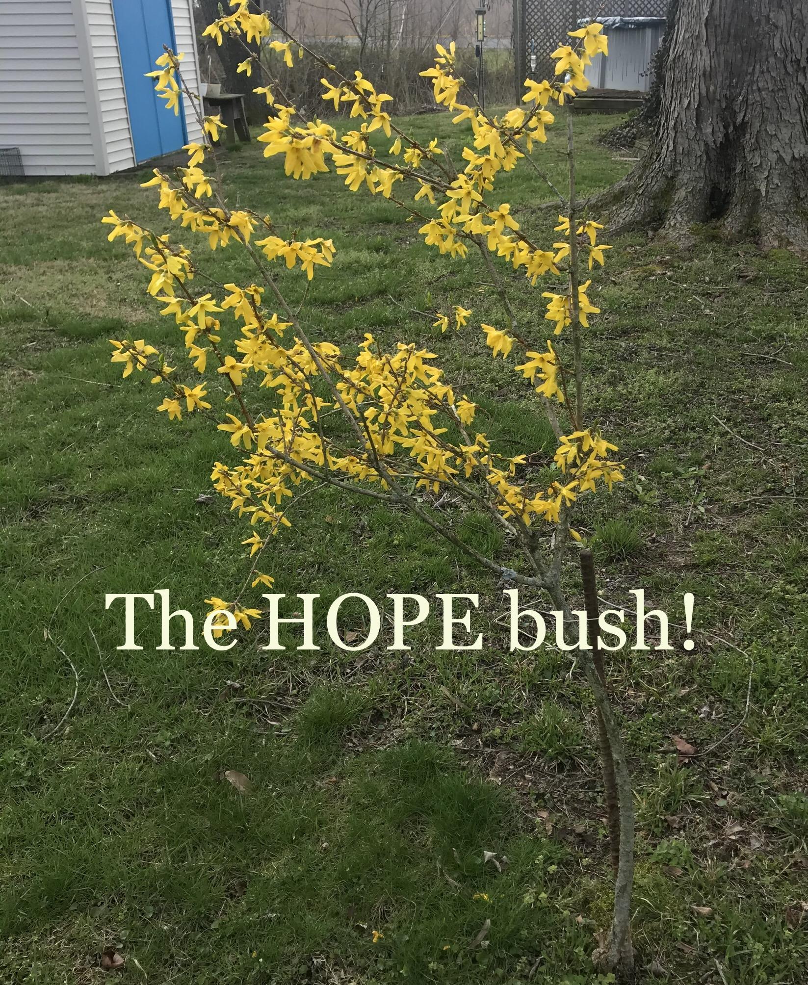 """My """"Hope"""" Bush"""